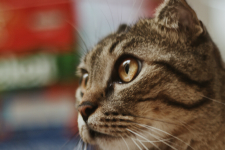 Nuôi mèo 4 năm và những kinh nghiệm nhỏ