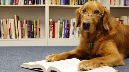Cách học để đạt 9.0 IELTS Reading